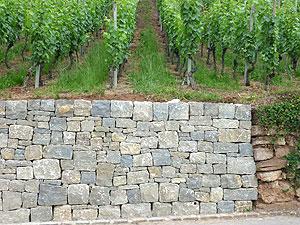 Rebmauern Maisprach