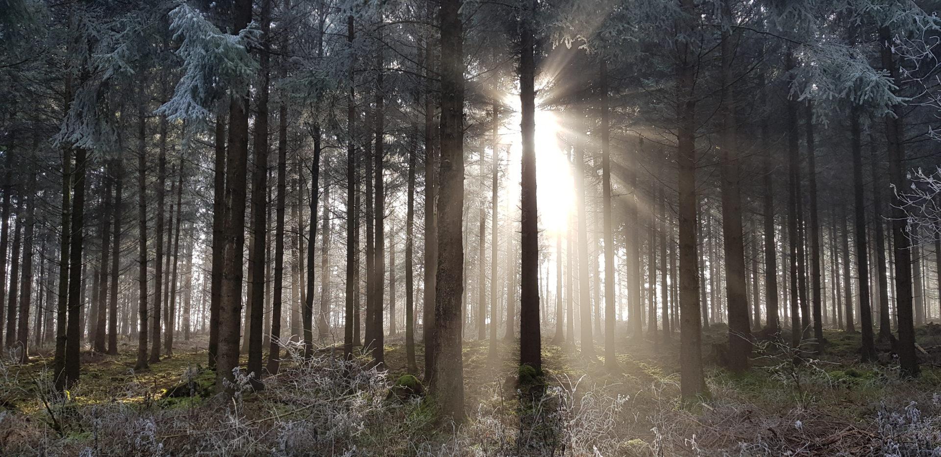 Bild Wald im Stress